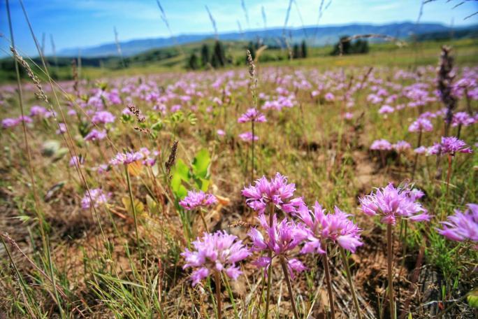Southern Idaho